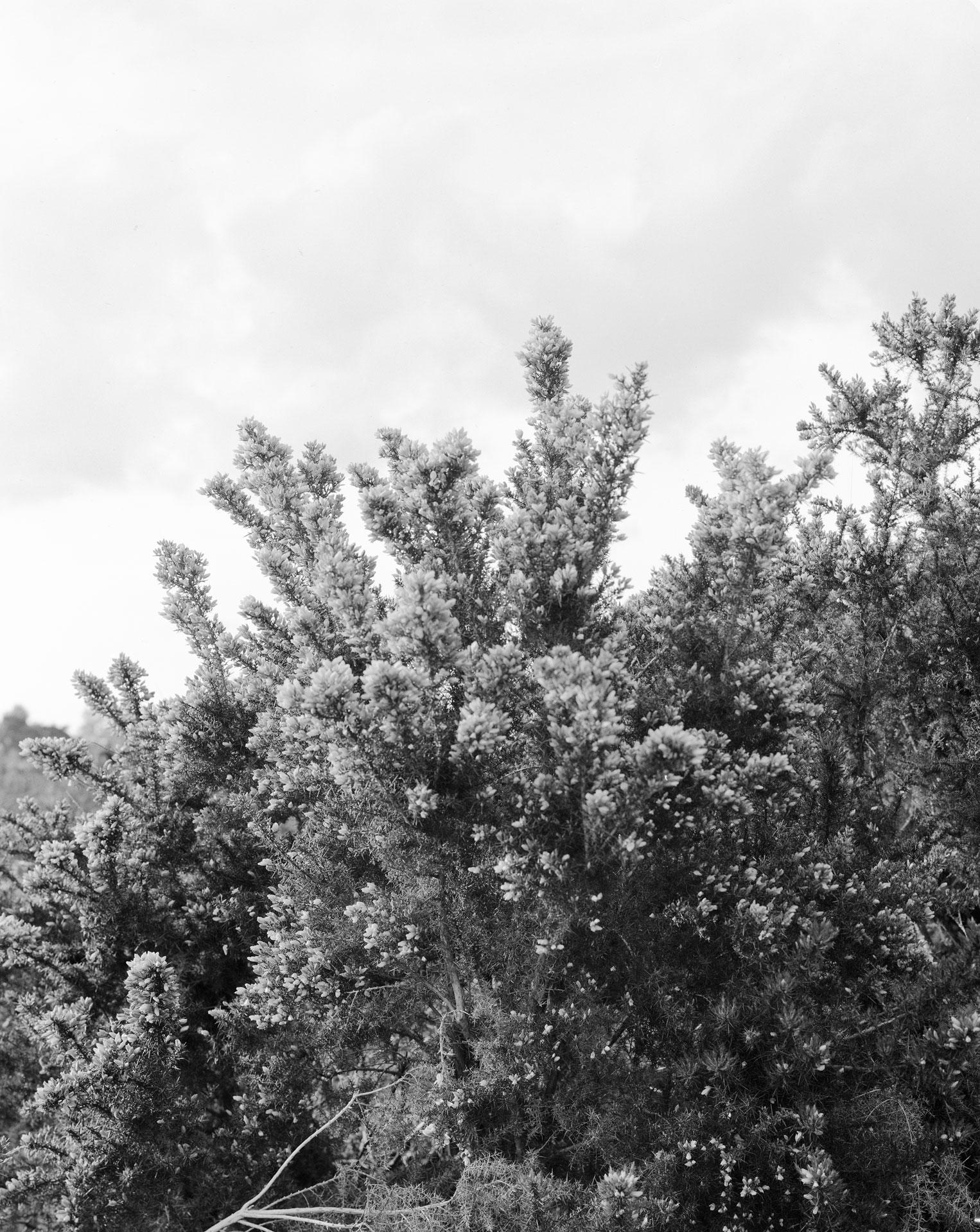 landscape_bush_01
