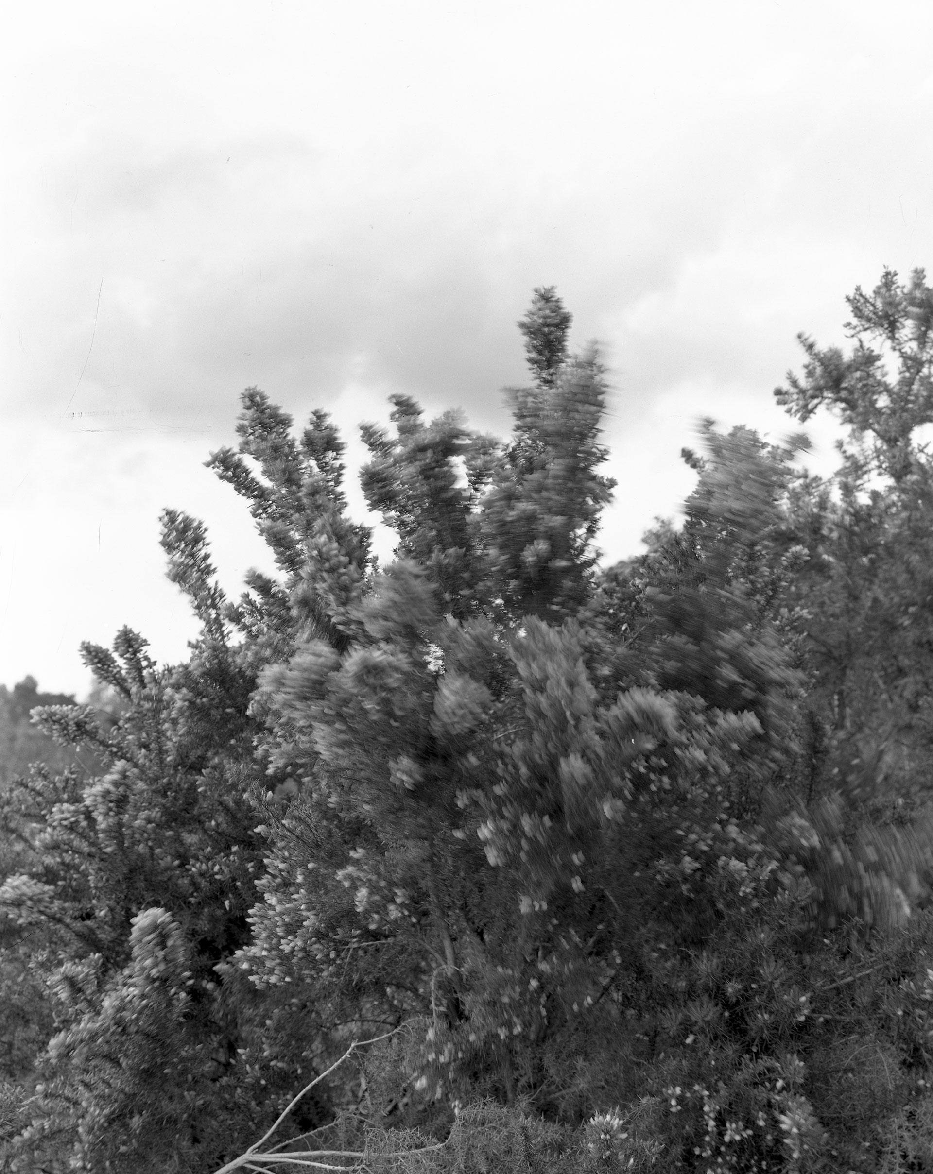 landscape_bush_02